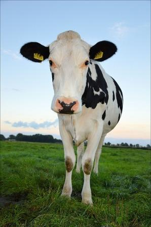 Milk and dairy are great protein sources.