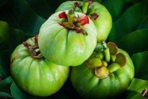 Garcinia Cambogia helps manage weight loss and decrease appetite