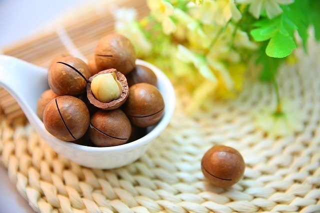 Macadamia nut is an excellent source of protein