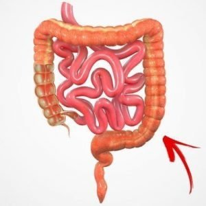 Your large intestine is a big factor in bowel movements.