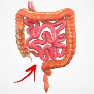 Your small intestine's peristaltic action helps you push through chyme.