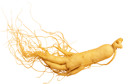 Ginseng as a stimulant helps your nervous system